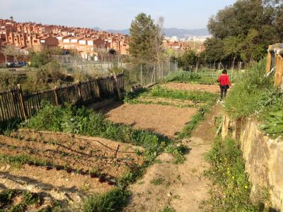 MADRE project - urban agriculture in the surrounding of Barcelona