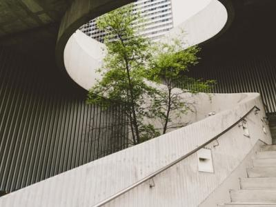 A tree in a concrete structure